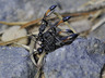 4 wasps
